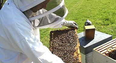Notre métier d'apiculteur en Alsace