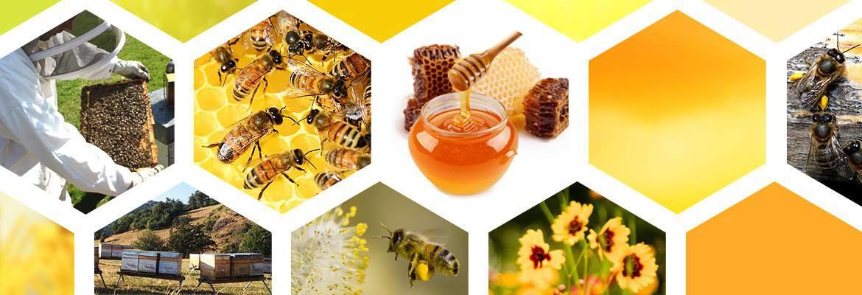 apiculteur-alsace
